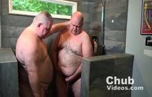 A Chubby Bears Audition